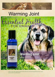 This blend was formulated for relief from chronic joint pain, arthritis, and hip dysplasia. Many aging animals suffer from arthritis and other forms of joint pain, some of which may be the result of past injuries. While these are common occurrences as animals age, poor breeding and excessive inbreeding in puppy mills have created many unfortunate and painful conditions suffered by very young dogs such as hip dysplasia, knee problems, and other spine and joint issues.