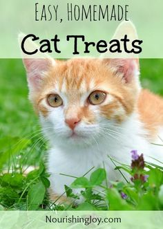 Easy, Natural, Homemade Cat Treats - Nourishing Joy. My cat wasn't that into these but my dog loved them.