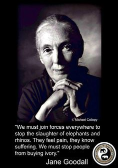 """Dr Jane Goodall : """"'We must join forces everywhere to stop the slaughter of elephants and rhinos. They feel pain, they know suffering. We must stop people from buying ivory."""" via Global March for Elephants and Rhinos Save Mother Earth, Save Our Earth, Maria Callas, Tilda Swinton, Brigitte Bardot, Beautiful Creatures, Animals Beautiful, Ute Lemper, Dian Fossey"""