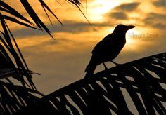 خلفية غروب الشمس الرائعة مع الطائر