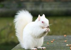 Albino Animals- this guy is super cute.... but he has no camoflauge...