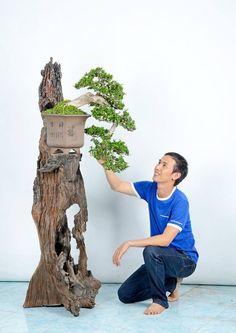 Bonsai- using a Tree to display a tree                                                                                                                                                                                 More