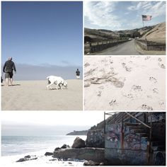 Dog friendly beach vacation on leash free dog beaches