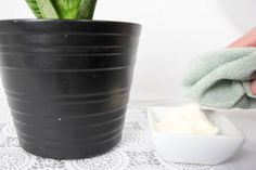 If you love the idea of having beautiful, healthy plants around your home, but can't quite seem to get your plants to thrive, try this mayonnaise house plant trick!