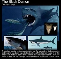 The Black Demon Cryptozoology A creature similar to the great white, but far exceeding its known size and weight, has been reported in the Sea of Cortez for years. It is this one beast that has come to be known as 'The Black Demon', that has locals scared Mythological Creatures, Fantasy Creatures, Mythical Creatures, Sea Creatures, Creepy Facts, Wtf Fun Facts, Creepy Stories, Ghost Stories, Megalodon