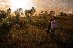 Migrația animalelor, un fenomen natural spectaculos