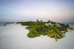 Coco Palm Dhuni Kolhu, Malediven – Luxus, Delfine & Romantik im Eco Beach Hideaway
