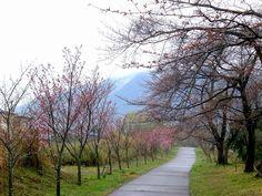 菰野町大羽根園地区 早朝散歩   平成25年3月28日撮影