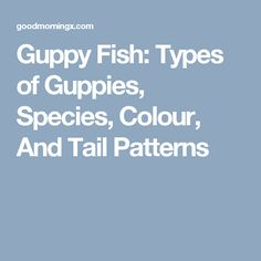 Guppy Fish: Types of Guppies, Species, Colour, And Tail Patterns