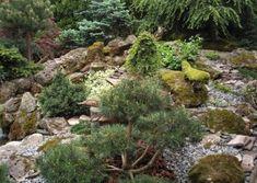 Galéria | Záhradníctvo Garden Team Gardening, Water, Plants, Outdoor, Gripe Water, Outdoors, Lawn And Garden, Plant, Outdoor Games