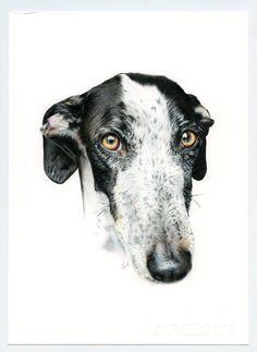 Galgo negro y blanco. Greyhound black and white. Ilustración lápiz. Illustration pencil