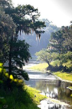 Way down upon the Suwannee River northwest if Gainesville, FL  #SuwanneeRiver  #GainesvilleFL