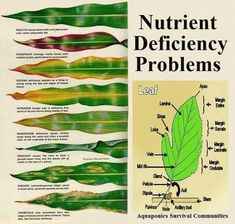So helpful- gardening tips. Nutrient deficiency in plants - what do the leaves tell you?Organic gardening tip. Interested in designing your own organic and natural vegetable backyard? Here are some green gardening tips which will help you in the righ Organic Gardening Tips, Urban Gardening, Organic Soil, Indoor Gardening, Jardin Decor, Organic Nutrients, Hydroponic Gardening, Vegetable Gardening, Gardening Tools