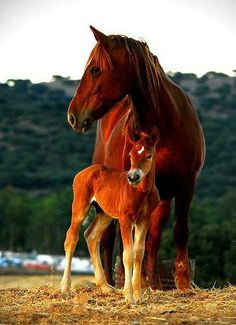 Foal with its mother.