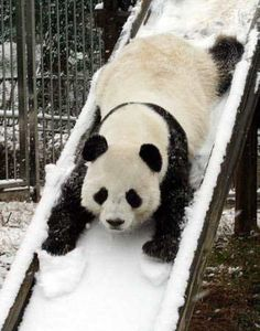 Panda + snowy slide = happy face smile time.