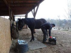 #spacer #las #konie #walk with horse #ride #horse #natural #adventure park gdynia kolibki #gdynia #love horse #kopyta @czyszczenie