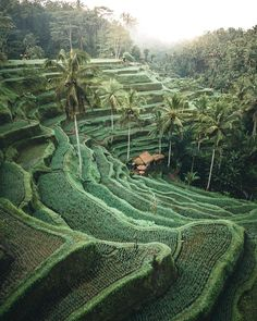 Rice fields in Bali, Indonesia. – Rice fields in Bali, Indonesia. – Rice fields in Bali, Indonesia. – Rice fields in Bali, Indonesia. Ubud, Bali Travel Guide, Asia Travel, Travel Pics, Beach Travel, Summer Travel, Travel Photography Tumblr, Nature Photography, Drone Photography