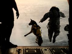 The True Awesomeness Of America's Most Military Elite Dogs