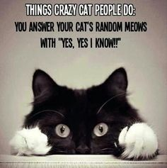 things cat people do