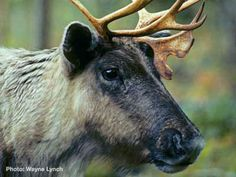 British Columbia - The Last Place on Earth Without an Endangered Species Law (CA) petition