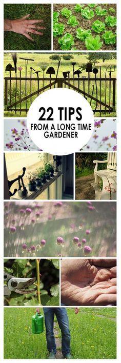 Gardening, Gardening Tips, Gardening Hacks, Easy Gardening Tips, Popular  Pin, Garden