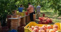 Μαγειρεύοντας με την Αρετή: Λικέρ τριαντάφυλλο με κρασί - e-ptolemeos.gr Greece, Vegetables, Food, Veggies, Essen, Vegetable Recipes, Yemek, Grease, Meals