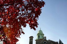 Fall foliage on the Immaculata University Campus