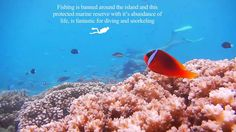 Tim Manning presents the Yadua Islands in Fiji #TimManning #Tim #Manning #TimManningNZ #TimothyManning #NZ #NewZealand