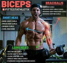 Although the biceps get all the spotlights, there are four major upper arm elbow flexor muscles: the biceps brachii, the brachialis, the brachioradialis and the teres pronator. The brachialis is the. Gym Workout Chart, Gym Workout Tips, Workout Plans, Biceps And Triceps, Biceps Workout, Big Biceps, Fitness Tips, Fitness Motivation, Muscle Fitness