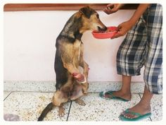 Faith in humanity restored:  Tara has been living on the streets 30 days on the streets of India with two open fractures!!. WE ARE GOING TO SAVE HER