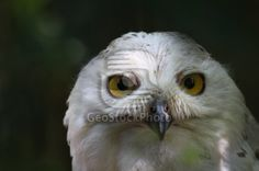 A wise and curious night owl welcomes you on our home page.