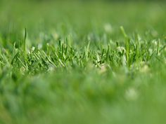 Tips for Getting Grass to Grow Anywhere