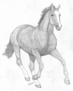 Скакун, рисунки карандашом