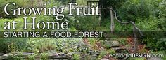Growing Fruit at Home - Starting a Food Forest