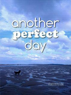 #meerfreude #meer #küste #nordsee #nordseeküste #watt #wattenmeer #hund #hundeamstrand #perfectday #dog #dogs #meerweh