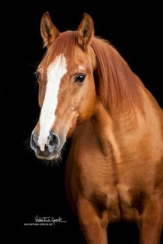 Fany by on DeviantArt Most Beautiful Horses, Pretty Horses, Horse Love, Animals Beautiful, Horse Photos, Horse Pictures, Equine Photography, Animal Photography, Free Horses