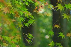 Sound of trees by Yuuko Nishiwaki on 500px
