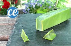 Voici Comment Couper Et Utiliser Le Gel D'une Feuille d'Aloe Vera. Feuille Aloe Vera, Gel Aloe, Honeydew, Celery, Vegetables, Fruit, Danger, Attention, Voici