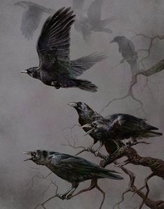 "Eerie and Glorious Illustration! ""Murder"" by rownd Crow Art, Raven Art, Bird Art, Beautiful Creatures, Gravure Photo, Quoth The Raven, Photo Animaliere, Jackdaw, Crows Ravens"