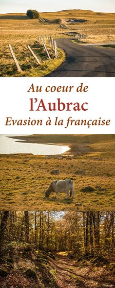 Discover Aubrac, the great French spaces. Road Trip France, France Europe, France Travel, Week End France, Bodega Bay Camping, Camping Cornwall, Riding Quotes, Picture Postcards, Limousin