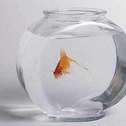 How to Take Care of a Goldfish: Keeping it Alive and Happy | eHow