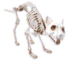 buy a boneyard cat animated skeleton at big lots for less shop big lots halloween in our department for our complete selection - Big Lots Halloween Decorations