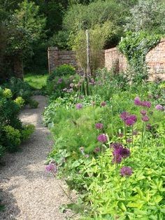 alliums in the oast garden in may at Sarah Raven's Perch Hill Farm, East Sussex