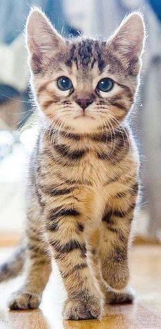 Cute Animals To Draw Pics – Miez Miez – Cute Cartoon Animals Girl; Cute Animals To Draw Pics – Miez Miez – Pretty Cats, Beautiful Cats, Animals Beautiful, Beautiful Pictures, Cute Kittens, Cute Kitten Pics, Cute Cartoon Animals, Cute Baby Animals, Wild Animals