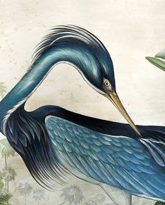 @mag.gieshep.herd Antique illustration of a heron Source: thisivyhouse Tumblr #antique #print #antiqueprint #painting #artwork #bird #elegant #illustration #avian #study #biology #biological #ecology #nature #natural #feathers #animal #wildlife #pond #waterbird #garden #lux #luxury #living #landscape #countryside #heron