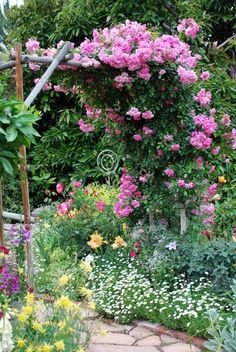 I like the combination here, the climbing roses with the delicate white flowers below and the yellow flowers across from that.