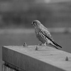 bird Zurich, Bird, Animals, Animales, Animaux, Birds, Animal, Animais