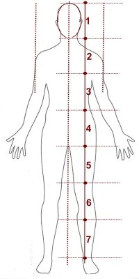 corpo-humano