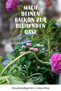 Here you will find tips and ideas for balcony design and how to make flowers, herbs, vegetables and other plants a snack balcony and a . Garden Floor, Balcony Garden, Indian Garden, White Trellis, Climbing Hydrangea, Love Garden, Balcony Design, Garden Borders, Garden Structures