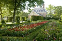 Gardens at the Governor's Palace, Williamsburg, Virginia, uncredited